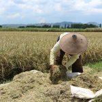 Petani Vs La Nina dan Ancaman Krisis Pangan